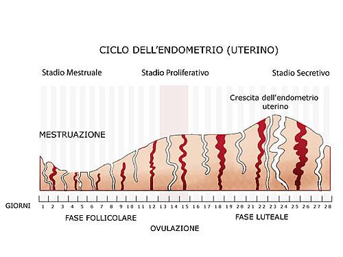 Ciclo dell'endometrio