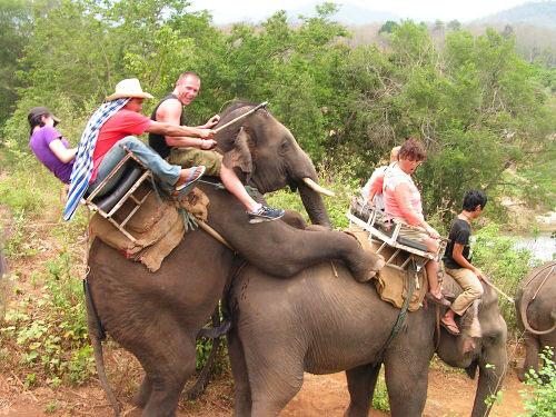 elefante-sesso
