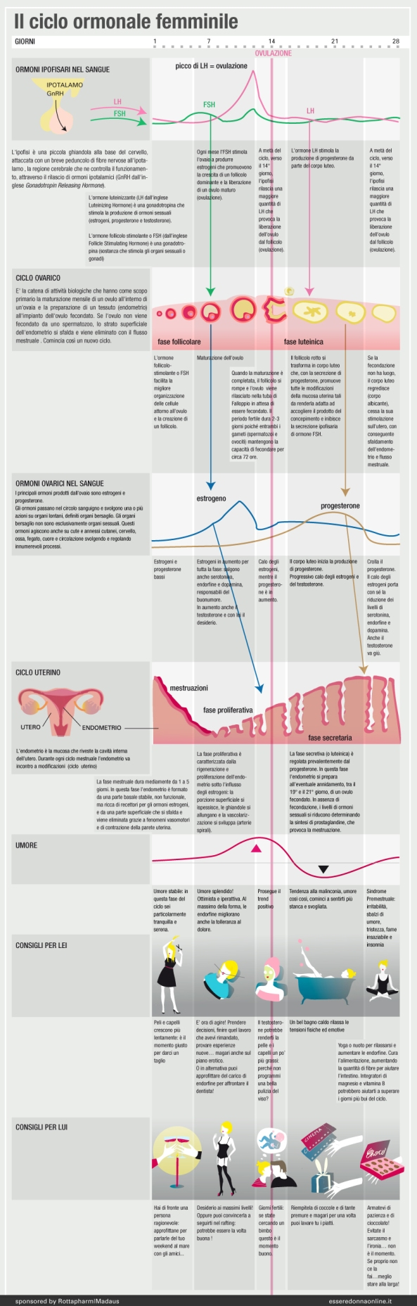 infografica sul ciclo mestruale